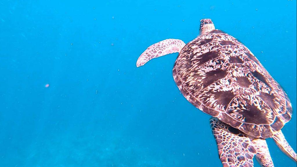 Nurkowanie zżółwiami nawyspach Gili